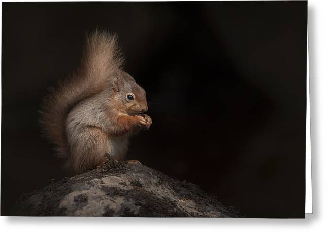 Red Squirrel Greeting Cards - Red Squirrel Portrait Greeting Card by Andy Astbury