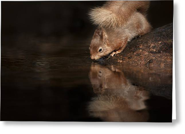 Orange Coat Greeting Cards - Red Squirrel Reflection Greeting Card by Andy Astbury