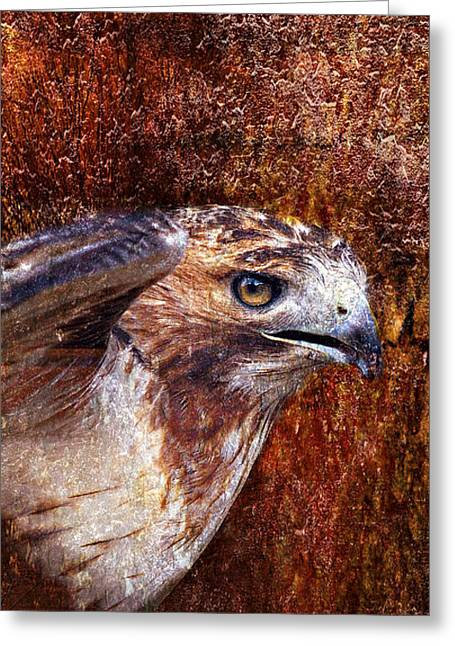Red Tail Hawk Digital Art Greeting Cards - Red-Tailed Hawk Greeting Card by J Larry Walker