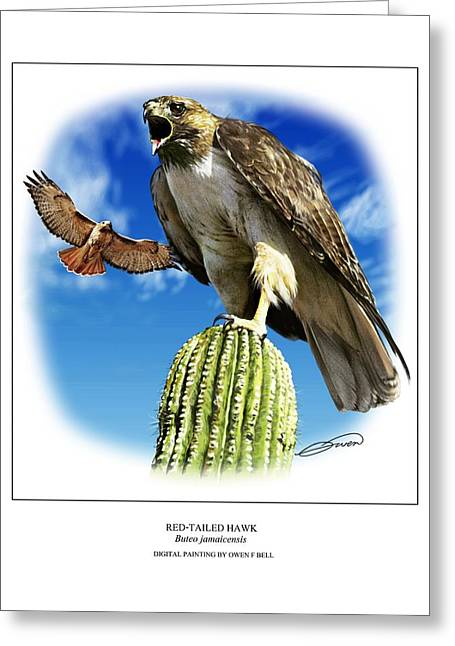 Red Tail Hawk Digital Art Greeting Cards - Red Tailed Hawk Greeting Card by Owen Bell