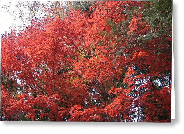 Red Leaves Greeting Cards - Red Tree Greeting Card by Naxart Studio