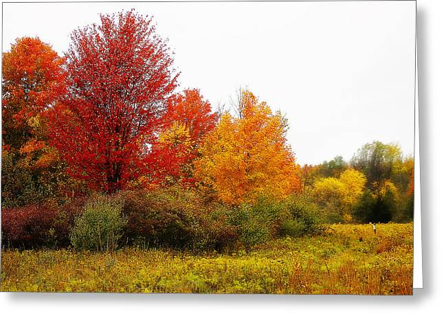 Seasons Greeting Cards - Red Tree Greeting Card by Scott Hovind