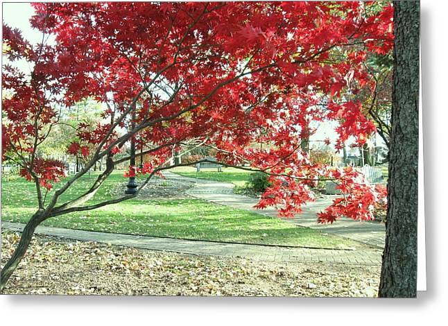Red Tree Greeting Card by Todd Sherlock