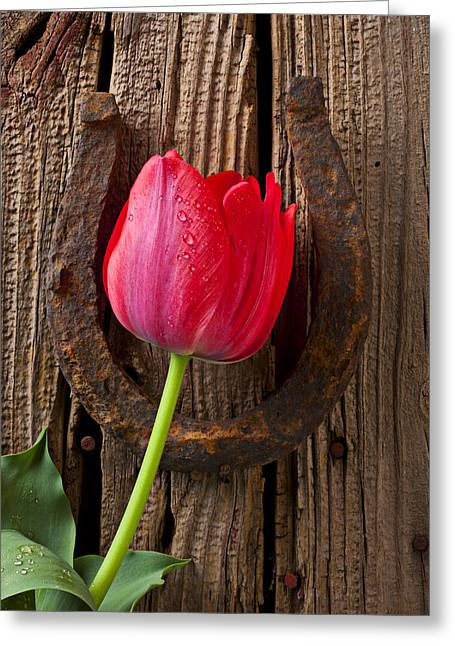 Good Luck Greeting Cards - Red Tulip And Horseshoe  Greeting Card by Garry Gay