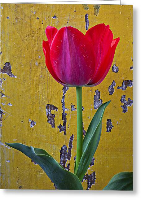Red Tulip Greeting Cards - Red tulip with yellow wall Greeting Card by Garry Gay