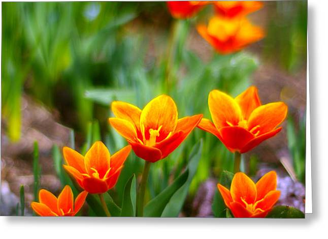 Red Tulips Greeting Card by Paul Ge