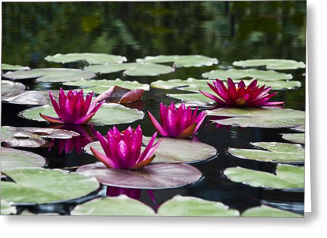 Water Lilly Digital Greeting Cards - Red Water Lillies Greeting Card by Bill Cannon