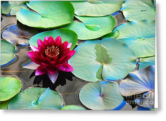 Stigma Greeting Cards - Red water lily Greeting Card by Claude Gariepy