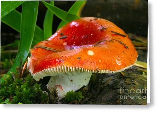 Hallucination Greeting Cards - Red Wild Mushroom  Greeting Card by Crystal Garner