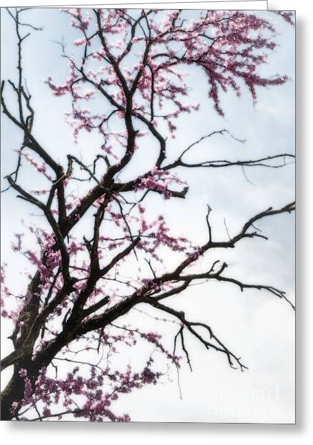 Keeper Of The Plains Greeting Cards - Redbud Meditation Greeting Card by Fred Lassmann