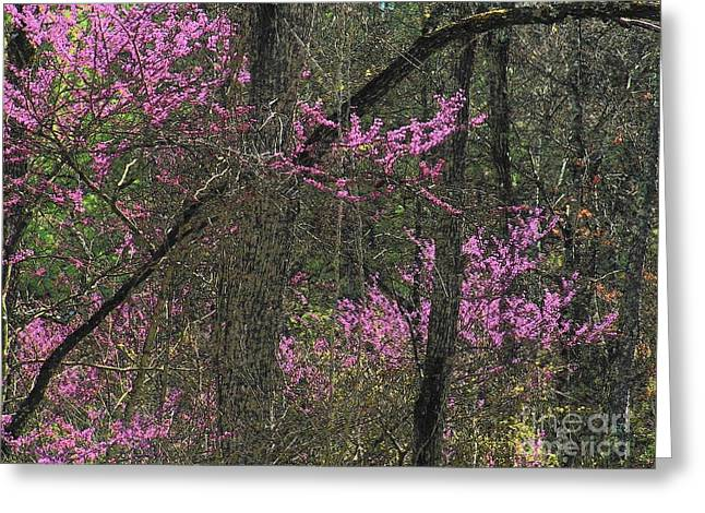 Red Bud Trees Greeting Cards - Redbuds in the Woods Greeting Card by Joyce Kimble Smith