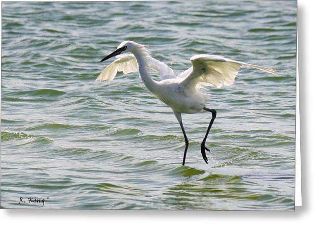 Ocean Art Photos Greeting Cards - Reddish Egret White Morph Feeding Greeting Card by Roena King