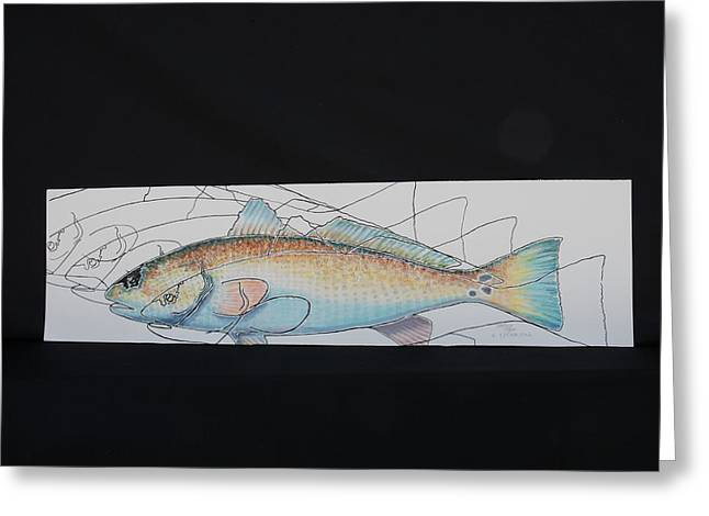 Waterlife Greeting Cards - Redfish Greeting Card by Pat  Joiner