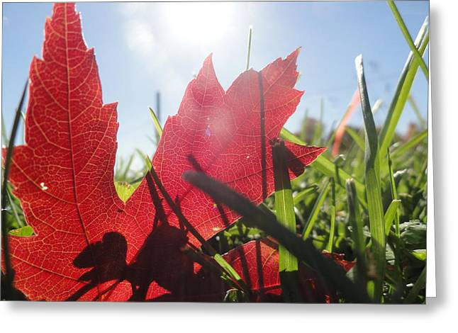 Red Leaves Greeting Cards - Red..green..blue Greeting Card by Trish Hale