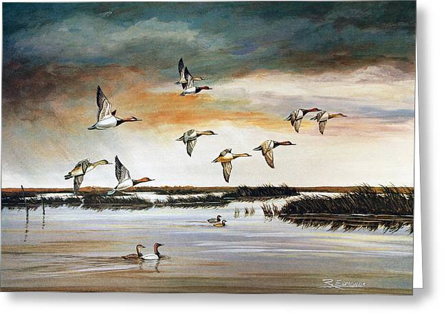Evening Scenes Greeting Cards - Redheads in Flight Greeting Card by Raymond Edmonds
