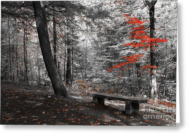 Aimelle Prints Photographs Greeting Cards - Reds in the Woods Greeting Card by Aimelle