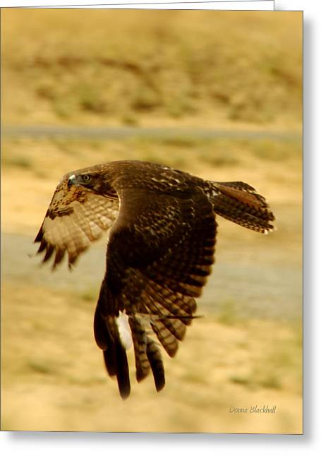Redtailed Hawks Greeting Cards - Redtail Flight Greeting Card by Donna Blackhall