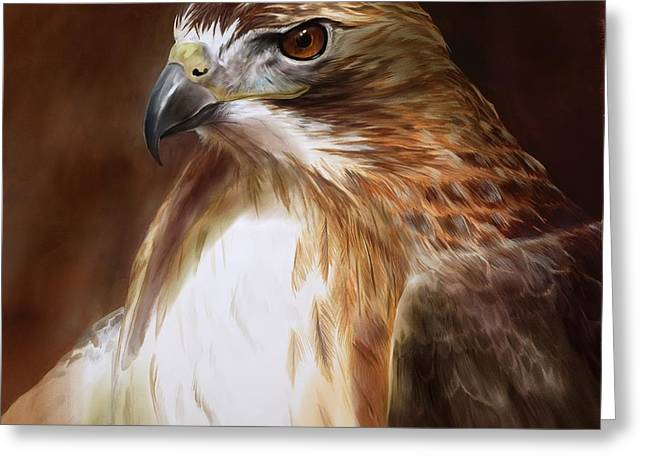 Bird Of Prey Greeting Cards - RedTailed Hawk Portrait Greeting Card by Steve Goad