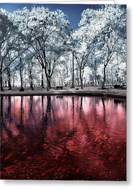 Infared Photography Greeting Cards - Redwater Ponds Greeting Card by Mario Bennet