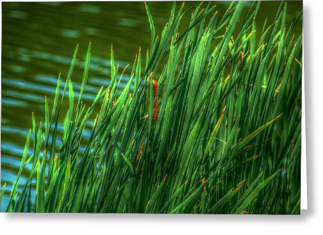 Reed Amoung Grass Greeting Card by Ronald T Williams