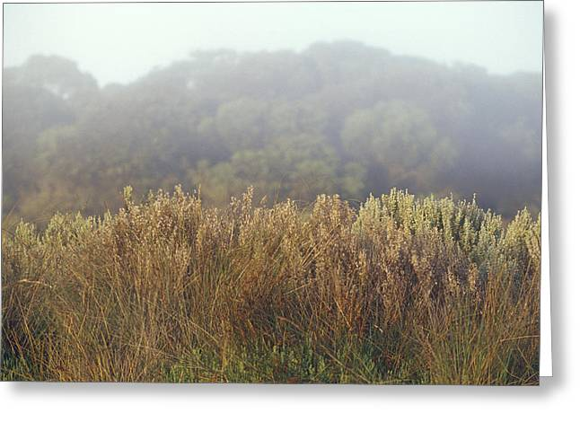 Reed Bed Greeting Cards - Reed Bed Grasses And Salt Bush Shrubs Greeting Card by Jason Edwards