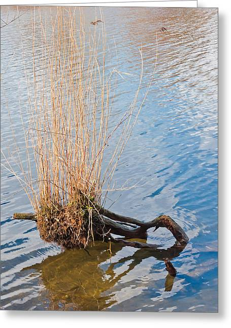 Beautiful Winter Willow Tree  Yellow Greeting Cards - Reed water and a willow stump Greeting Card by Ruud Morijn