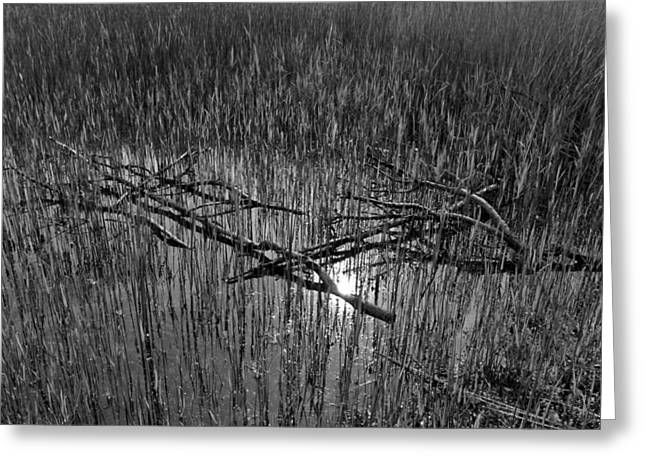Branch Pyrography Greeting Cards - Reeds and Tree Branches Greeting Card by David Pyatt