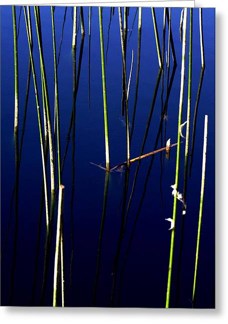 Reflecting Water Greeting Cards - Reeds of Reflection Greeting Card by Chris Brannen