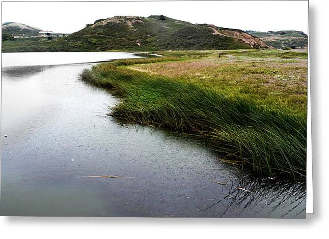 Matt Hanson Greeting Cards - Reeds on the Water Greeting Card by Matt Hanson