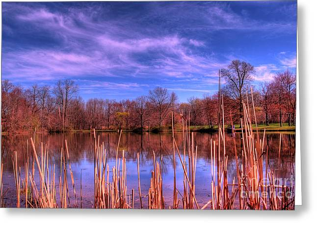 Quite Photographs Greeting Cards - Reeds Greeting Card by Paul Ward