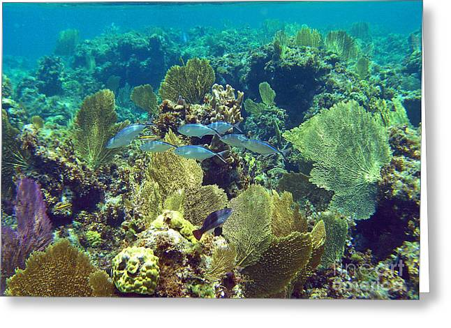 Undersea Photography Greeting Cards - Reef Life Greeting Card by Li Newton