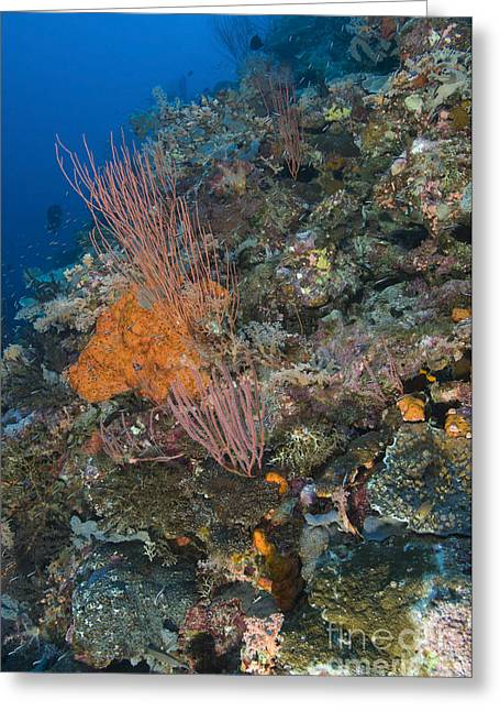 Cnidaria Greeting Cards - Reef Scape In The Solomon Islands Greeting Card by Steve Jones
