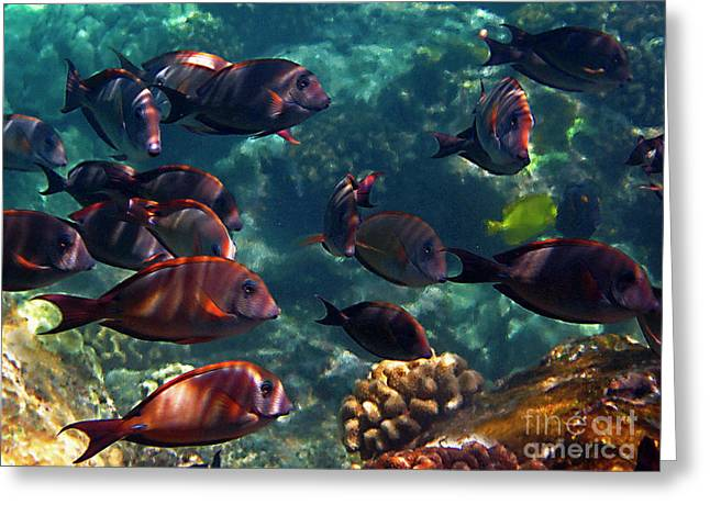 Reef Fish Greeting Cards - Reef School Greeting Card by Bette Phelan