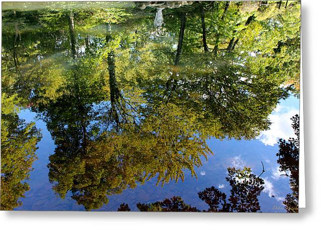 Reflection Of Trees In The Forest Greeting Cards - Reflect On Autumn Greeting Card by Debra     Vatalaro