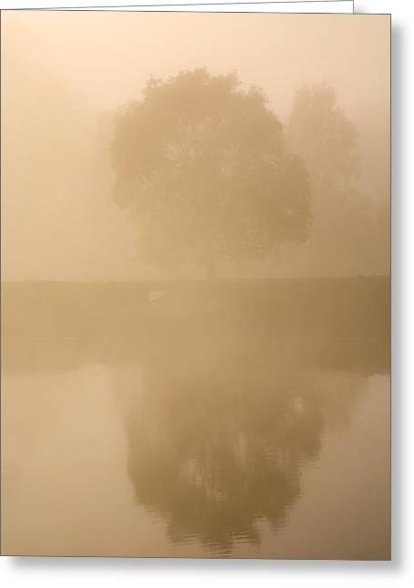 Paddock Greeting Cards - Reflected Gum Sunrise Greeting Card by Mike  Dawson