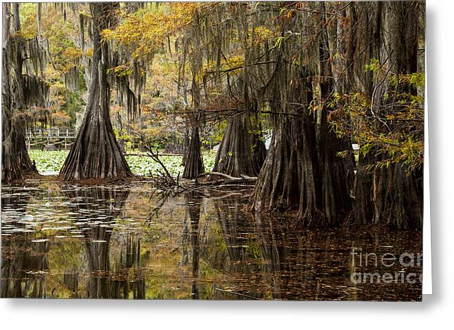 Caddo Lake Greeting Cards - Reflected Pool Greeting Card by Iris Greenwell