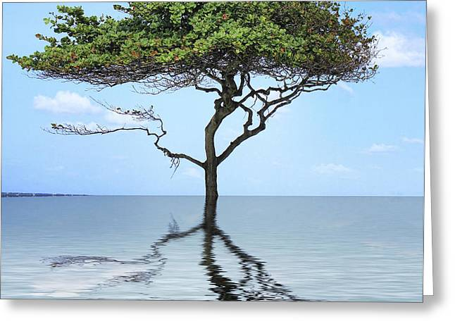 Reflecting Greeting Card by Cheryl Young
