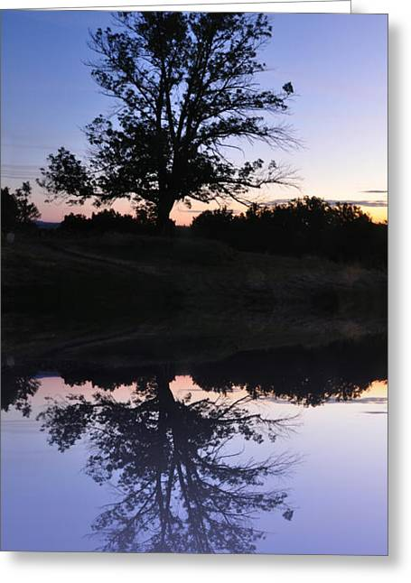 Stream Digital Art Greeting Cards - Reflecting Tree Greeting Card by Bill Cannon