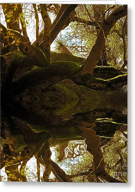 Beautiful Scenery Greeting Cards - Reflecting Tree Greeting Card by Cheryl Young