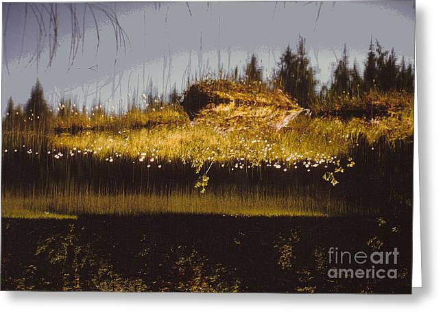 Reflection Greeting Card by Alcina Morello