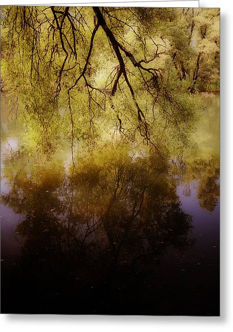 Yellow Leaves Greeting Cards - Reflection Greeting Card by Joana Kruse