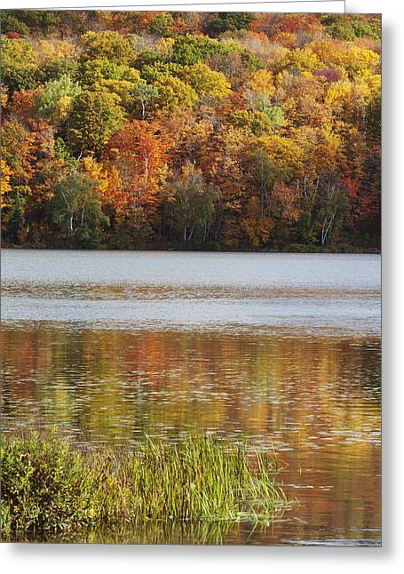 Design Pics - Greeting Cards - Reflection Of Autumn Colors In A Lake Greeting Card by Susan Dykstra