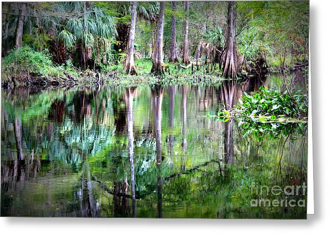 Carol Groenen Greeting Cards - Reflection of Cypress Trees Greeting Card by Carol Groenen