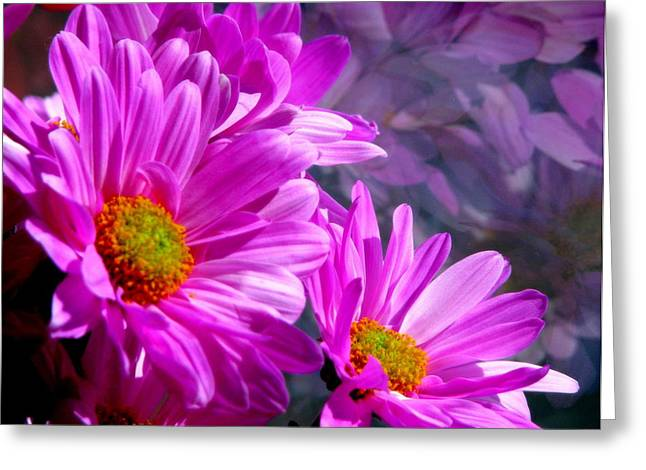 Pink Flower Prints Greeting Cards - Reflection of Flowers in Window - 3  Greeting Card by Tam Graff