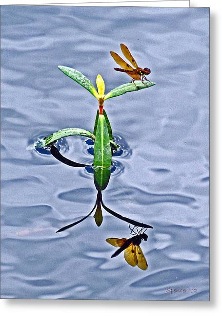 Amberwing Greeting Cards - Reflection of LIfe Greeting Card by T Guy Spencer