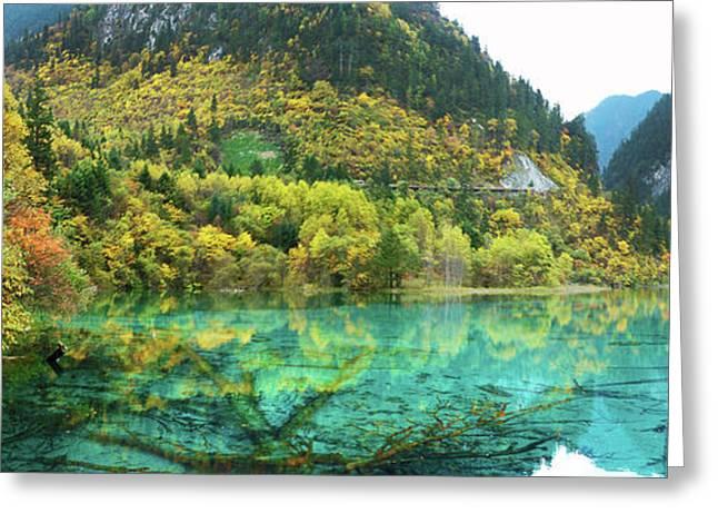 Jennifer Lam Greeting Cards - Reflection of Spring Greeting Card by Jennifer Lam