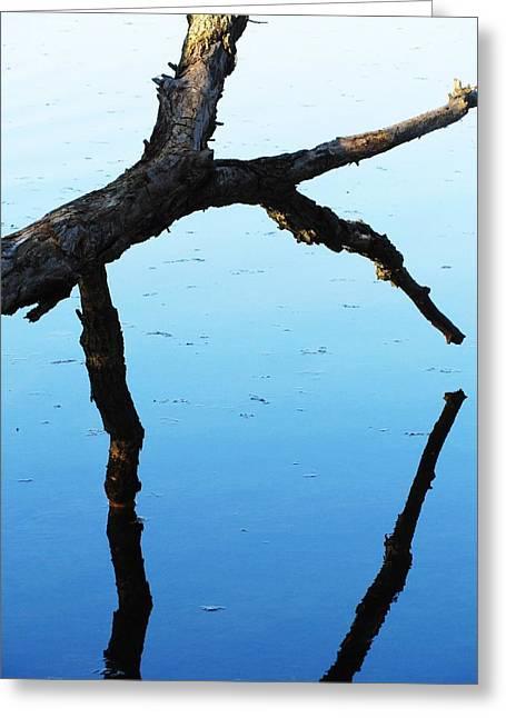 Reflections #1 Greeting Card by Todd Sherlock