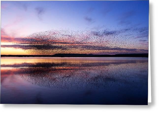 Reflections At Dawn Greeting Card by Oscar Berrueta