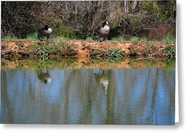 Reflections Greeting Card by Jai Johnson