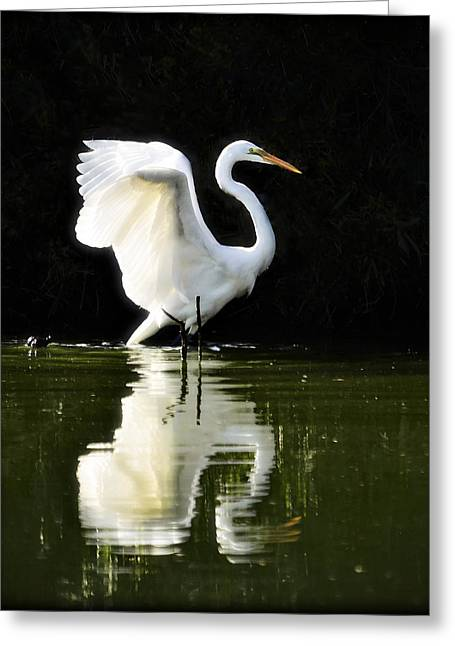 Great White Egrets Greeting Cards - Reflections of an Angel  Greeting Card by Saija  Lehtonen